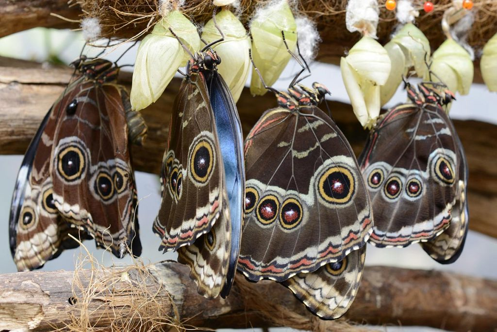 Butterflies and pupae representing change