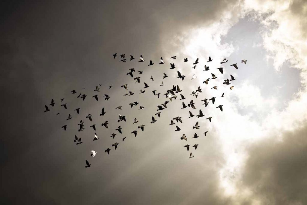 Arrow Formation Birds | Axiom Communications