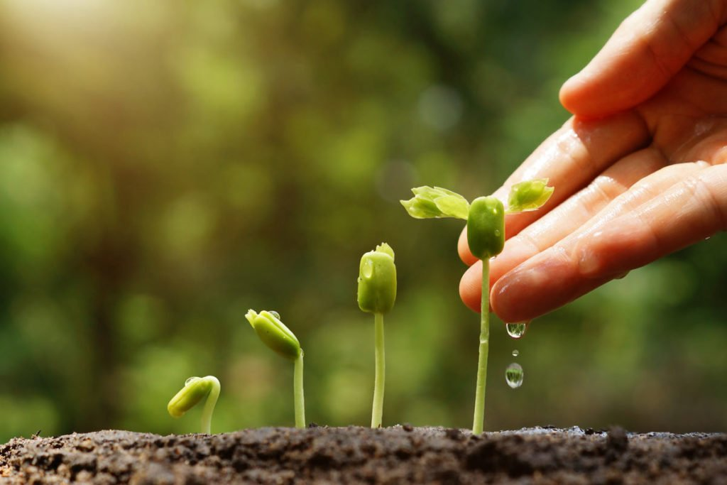 Hand Nurturing Seedlings | Axiom Communications